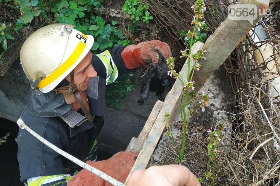 На Днепропетровщине пожарные спасли жизнь двум щенкам, - ФОТО , фото-2