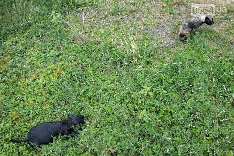 На Днепропетровщине пожарные спасли жизнь двум щенкам, - ФОТО , фото-5