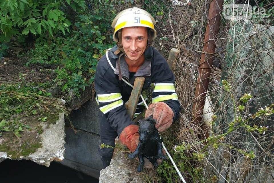 На Днепропетровщине пожарные спасли жизнь двум щенкам, - ФОТО , фото-4