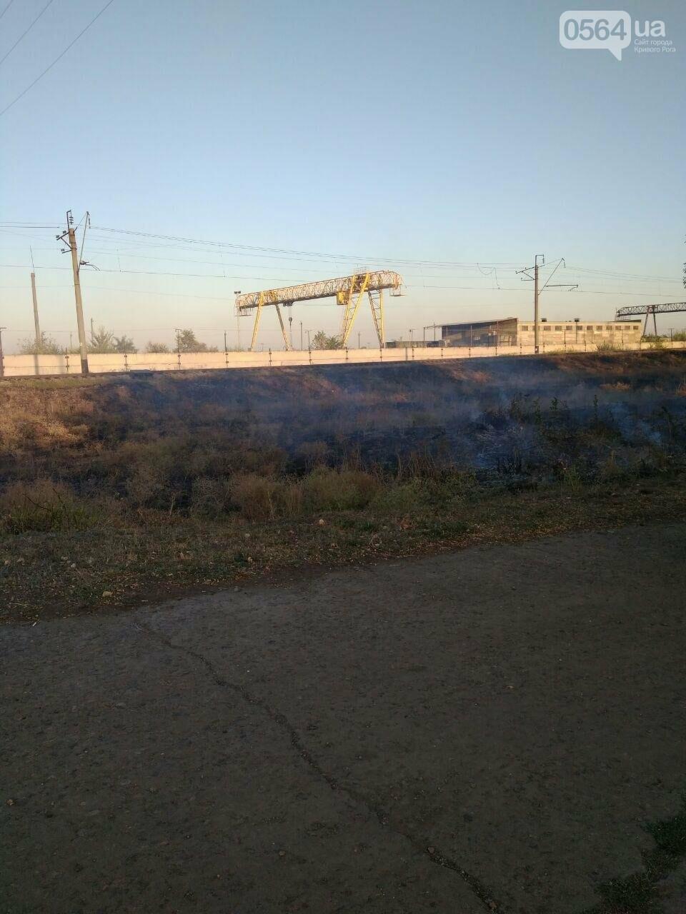 В Криворожском районе загорелась лесопосадка возле железной дороги, - ФОТО , фото-6