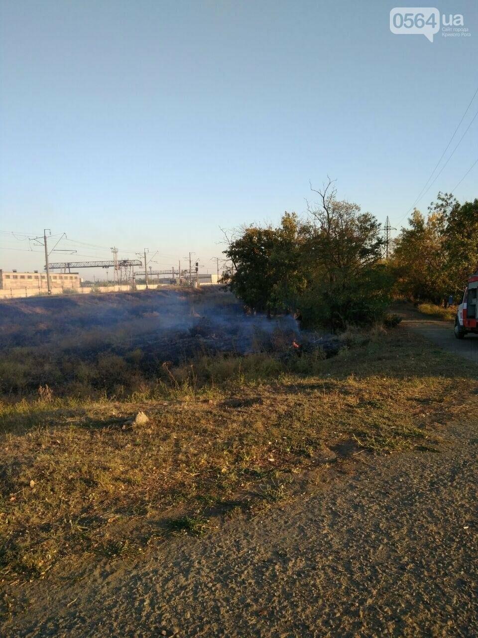 В Криворожском районе загорелась лесопосадка возле железной дороги, - ФОТО , фото-8