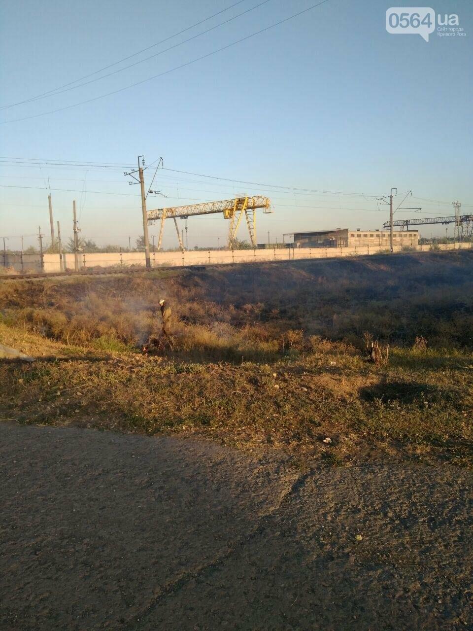 В Криворожском районе загорелась лесопосадка возле железной дороги, - ФОТО , фото-9