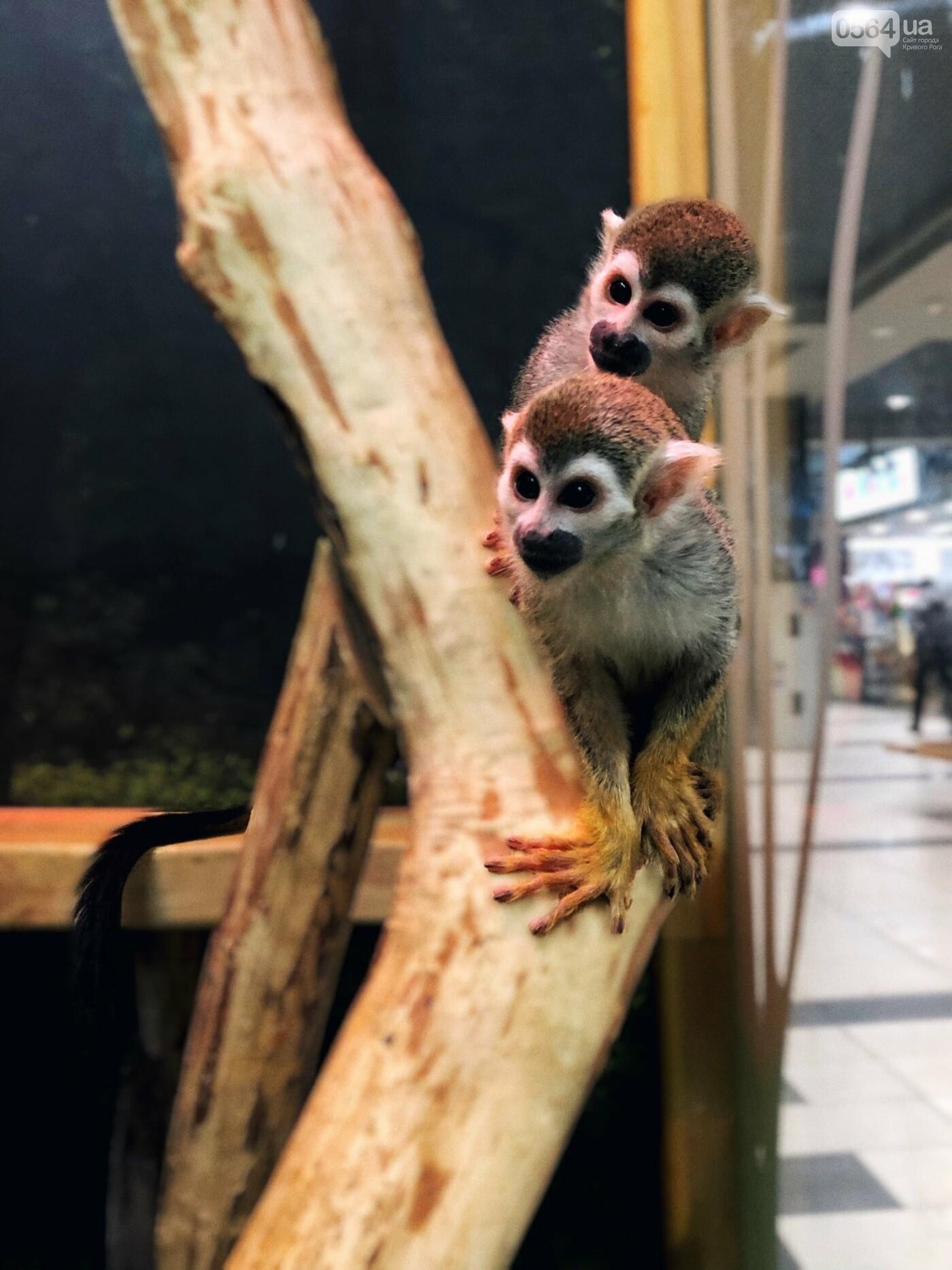 В Кривом Роге открылся первый контактный зоопарк!, фото-2