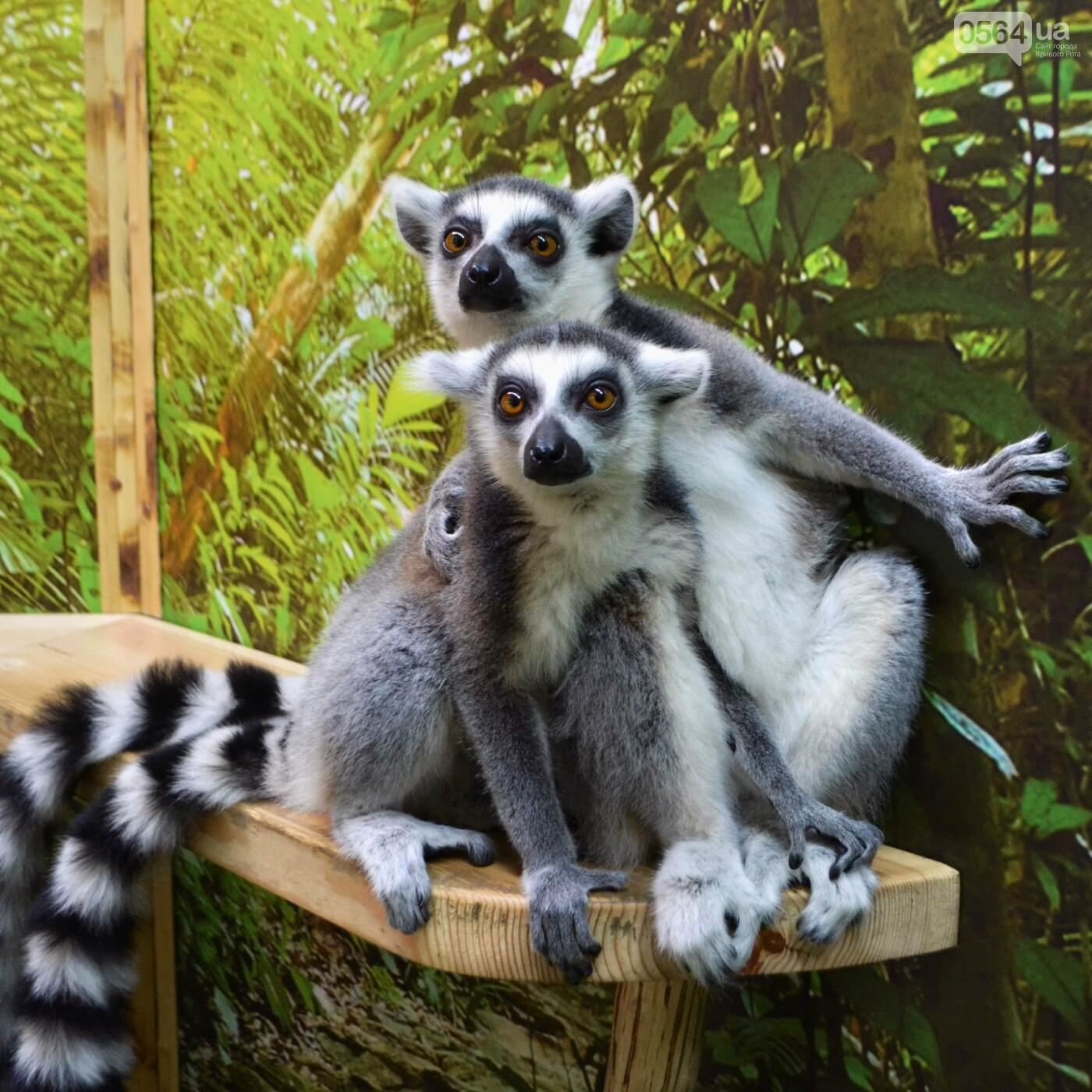 В Кривом Роге открылся первый контактный зоопарк!, фото-1