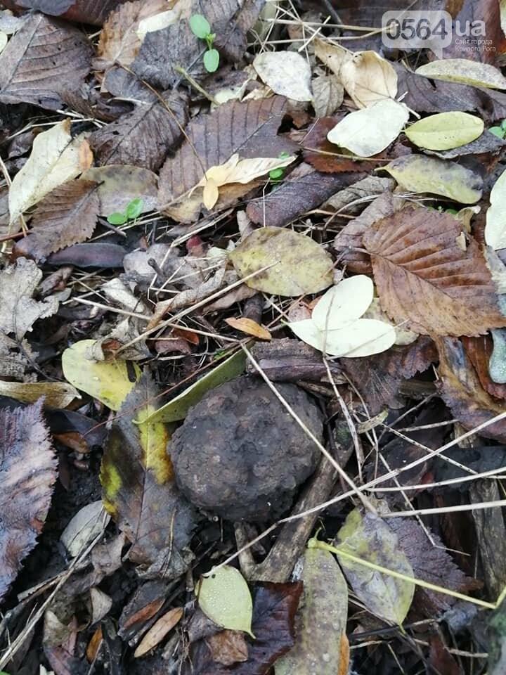 """Во время """"тихой охоты"""" в Криворожском районе нашли гранату, - ФОТО , фото-2"""