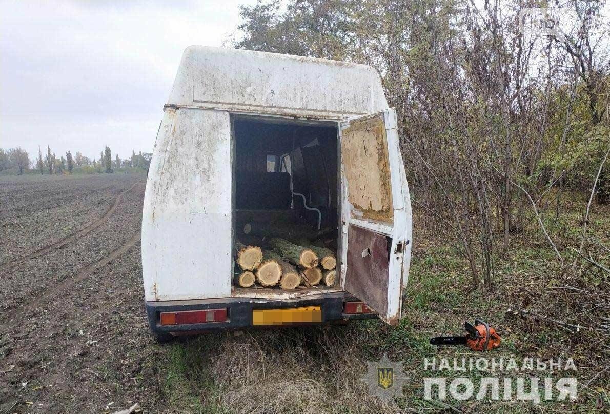 В Криворожском районе мужчина незаконно спилил 29 акаций, - ФОТО , фото-1
