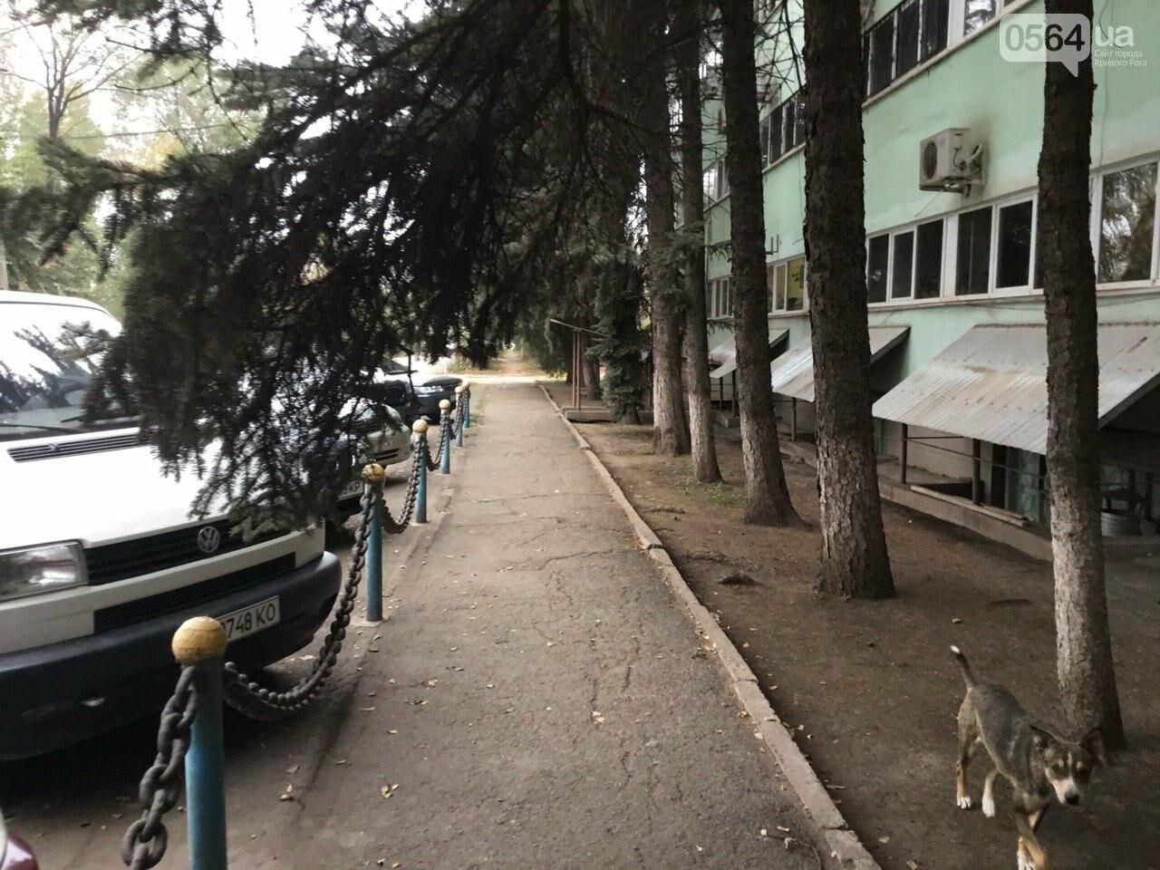 Депутат: в центре Кривого Рога 15 лет незаконно используют участок земли, - ФОТО, ВИДЕО, фото-41
