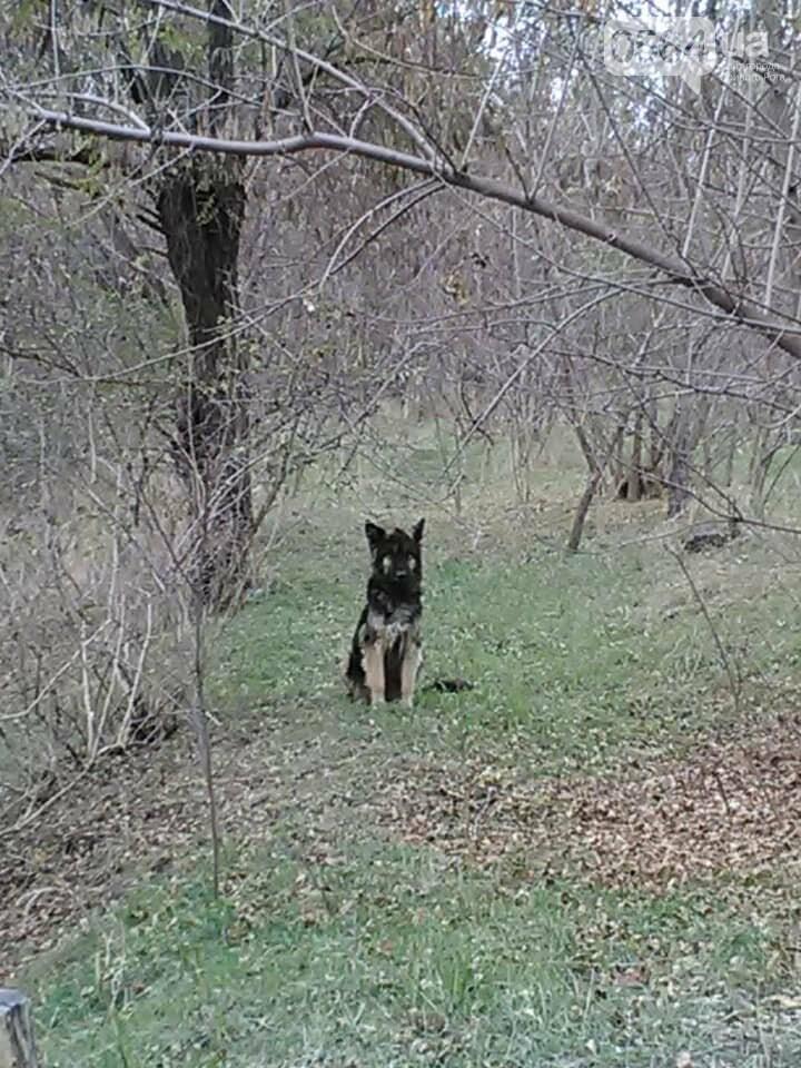 Пёс сидит и преданно ждёт вас: криворожане ищут хозяев, которые бросили в посадке собаку, - ФОТО , фото-1