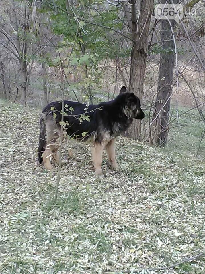 Пёс сидит и преданно ждёт вас: криворожане ищут хозяев, которые бросили в посадке собаку, - ФОТО , фото-2