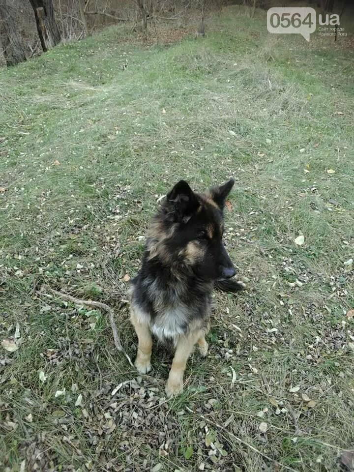 Пёс сидит и преданно ждёт вас: криворожане ищут хозяев, которые бросили в посадке собаку, - ФОТО , фото-3