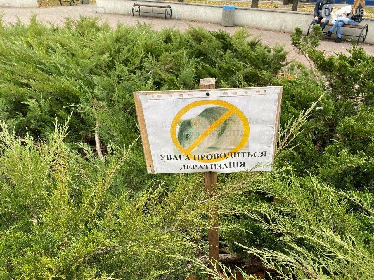Криворожан просят не гулять сегодня  вечером возле горисполкома, - ФОТО , фото-5