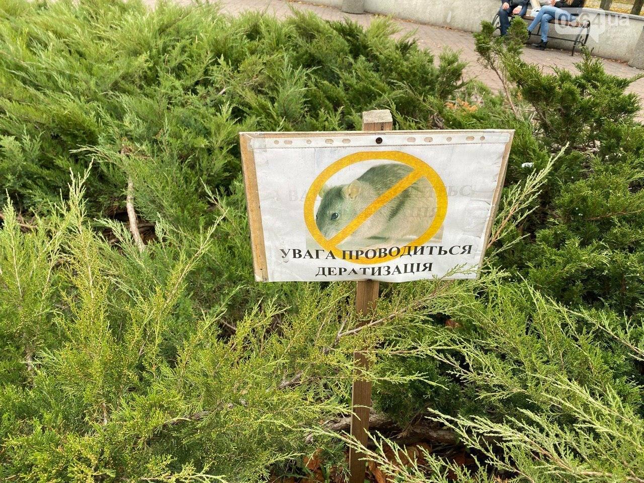 Криворожан просят не гулять сегодня  вечером возле горисполкома, - ФОТО , фото-1