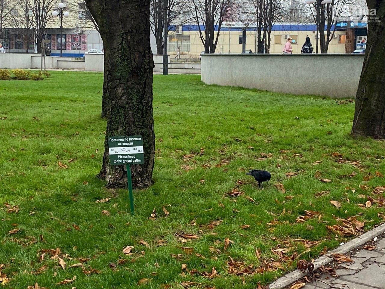 """Под криворожским горисполкомом испортили новый газон. Журналисты засняли """"вандалов"""", - ФОТО, ВИДЕО , фото-6"""