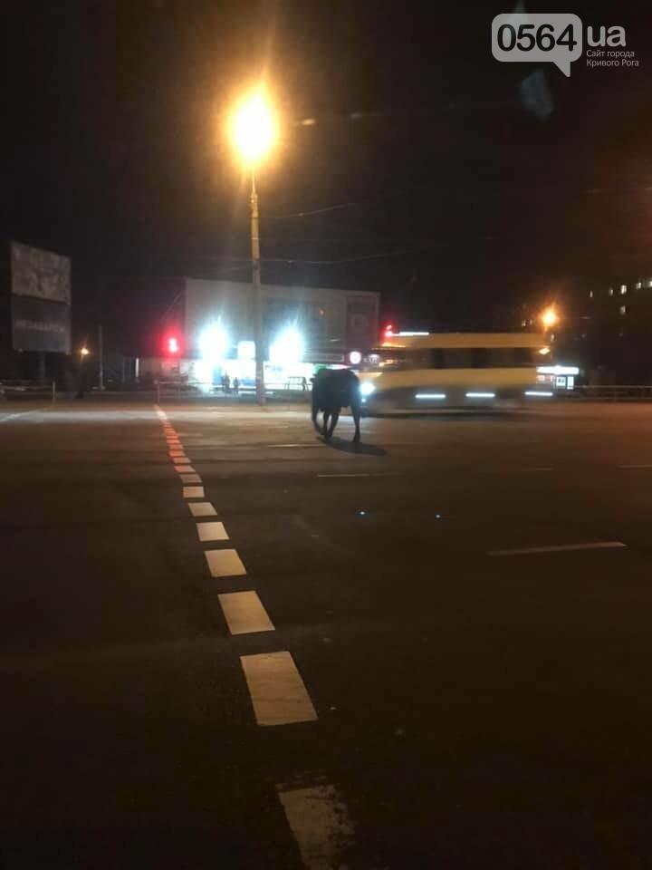Вечером криворожский бык напугал автолюбительницу, - ФОТО , фото-1