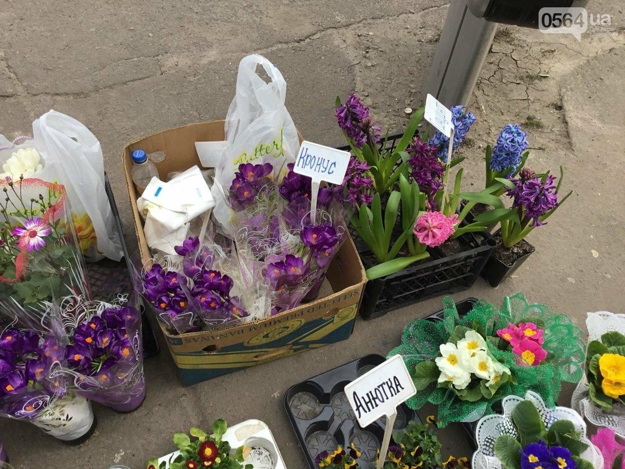 Сколько стоят примула, цикламен, мимоза? Обзор цен на цветы в Кривом Роге, - ФОТО, ВИДЕО, фото-30