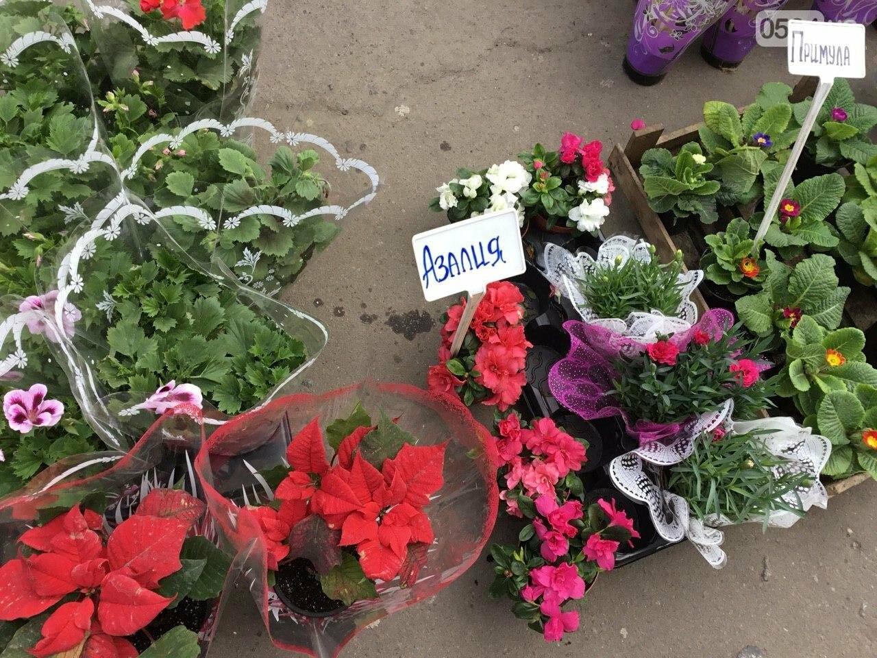 Сколько стоят примула, цикламен, мимоза? Обзор цен на цветы в Кривом Роге, - ФОТО, ВИДЕО, фото-29