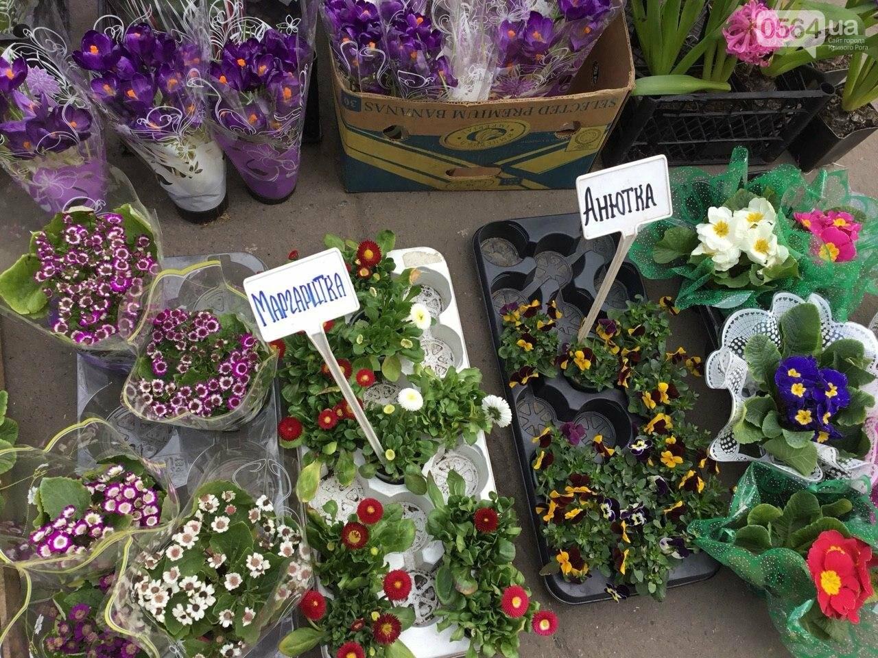 Сколько стоят примула, цикламен, мимоза? Обзор цен на цветы в Кривом Роге, - ФОТО, ВИДЕО, фото-27