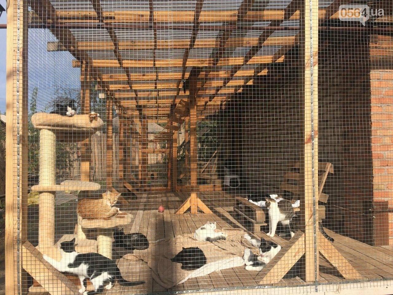 """""""Дай на лапу!"""", - создательницы """"котодома"""" в Кривом Роге собирают средства на Зооотель для домашних животных, - ФОТО, фото-1"""
