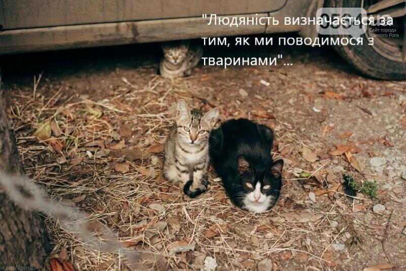 """""""Дай на лапу!"""", - создательницы """"котодома"""" в Кривом Роге собирают средства на Зооотель для домашних животных, - ФОТО, фото-3"""