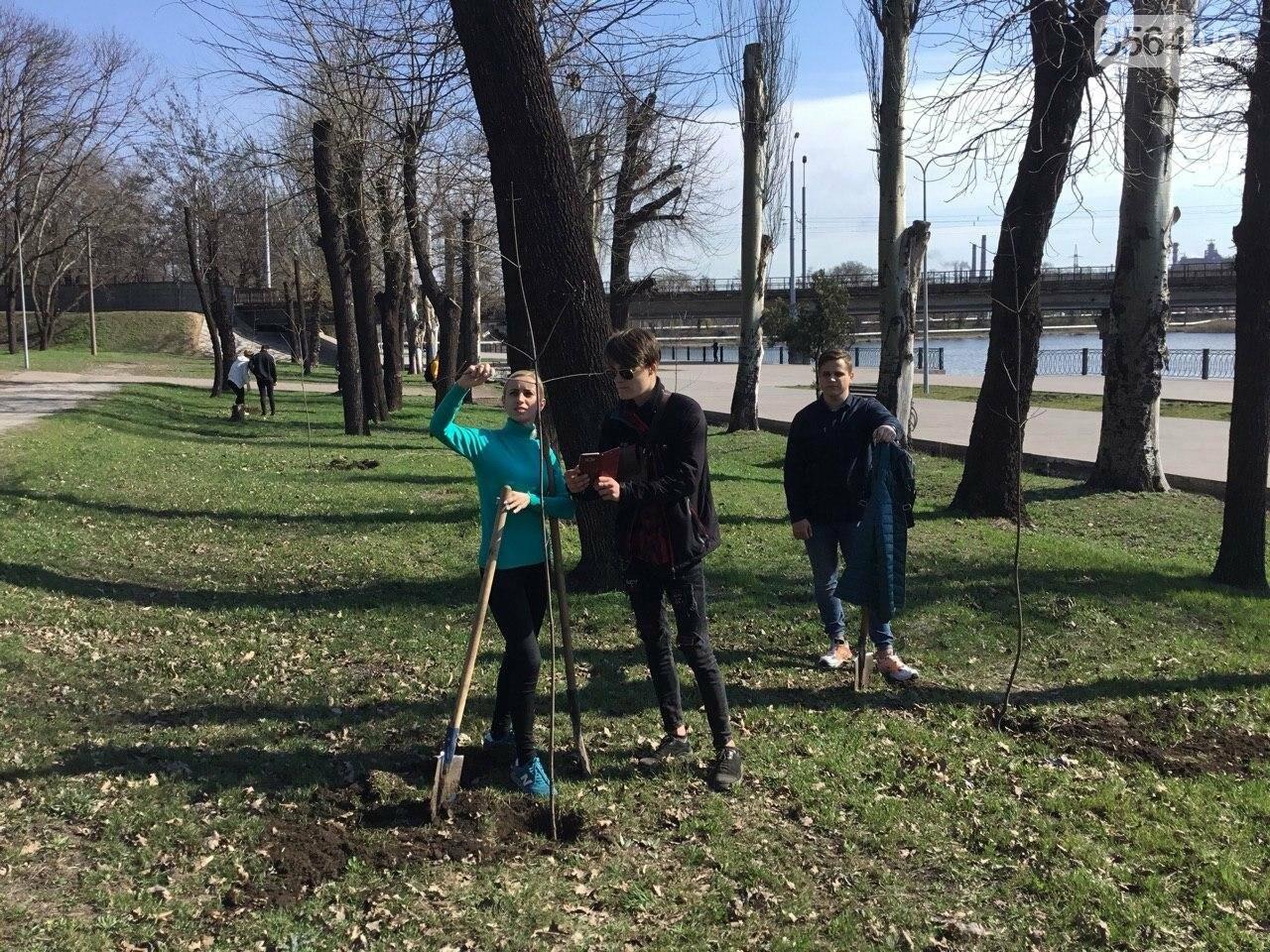 """""""Посади 1000 деревьев"""", - в Кривом Роге проходит акция ко Дню украинского добровольца, - ФОТО, ВИДЕО, фото-3"""