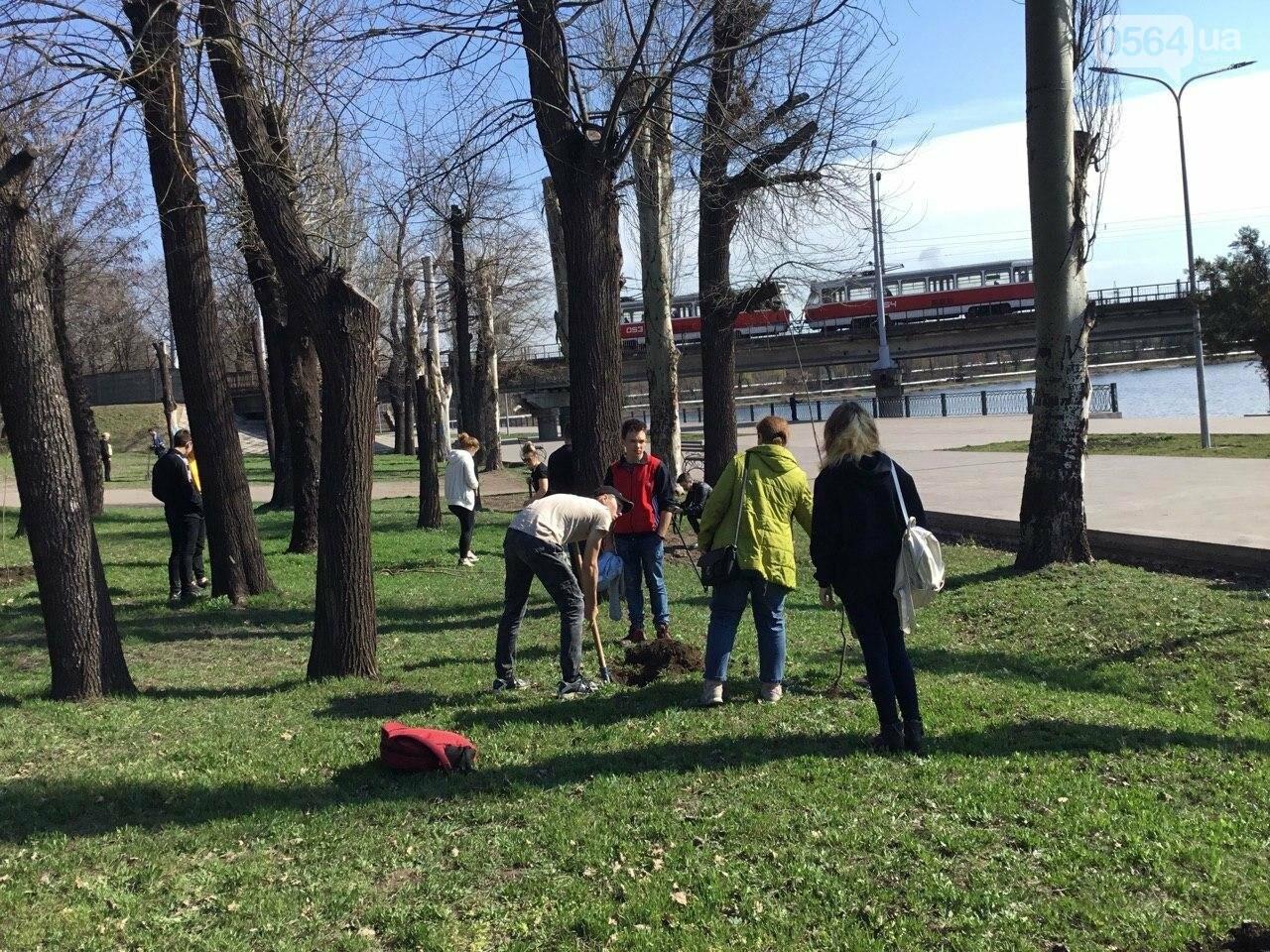 """""""Посади 1000 деревьев"""", - в Кривом Роге проходит акция ко Дню украинского добровольца, - ФОТО, ВИДЕО, фото-1"""