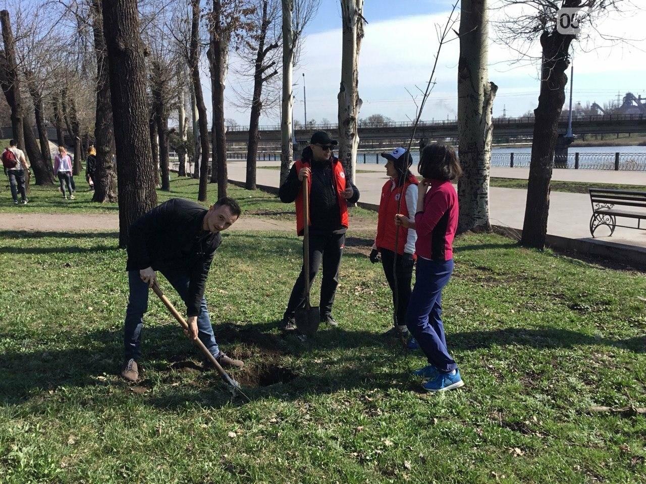 """""""Посади 1000 деревьев"""", - в Кривом Роге проходит акция ко Дню украинского добровольца, - ФОТО, ВИДЕО, фото-4"""
