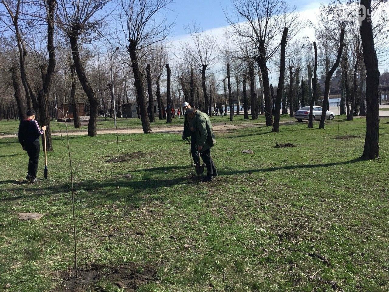 """""""Посади 1000 деревьев"""", - в Кривом Роге проходит акция ко Дню украинского добровольца, - ФОТО, ВИДЕО, фото-6"""