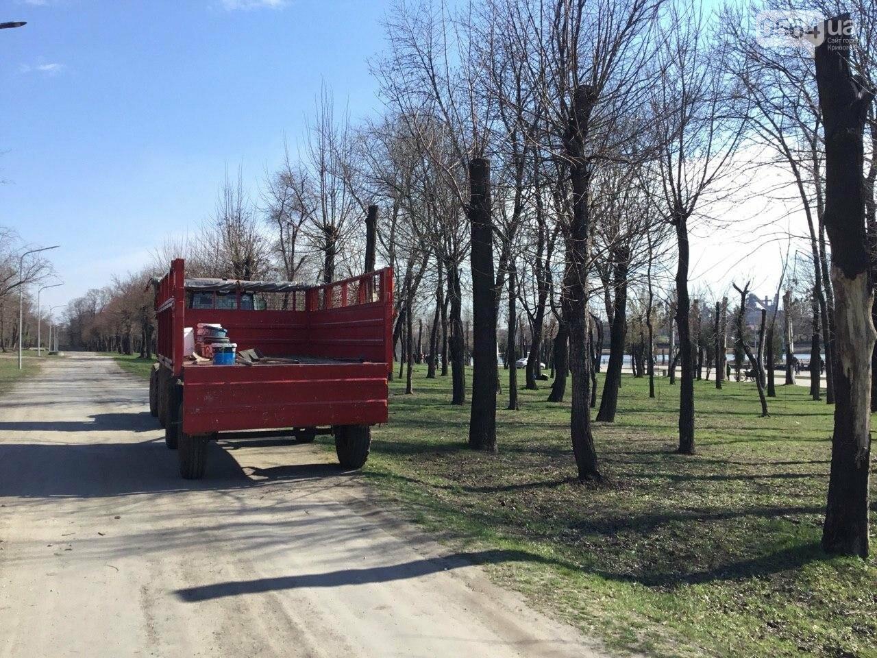 """""""Посади 1000 деревьев"""", - в Кривом Роге проходит акция ко Дню украинского добровольца, - ФОТО, ВИДЕО, фото-7"""