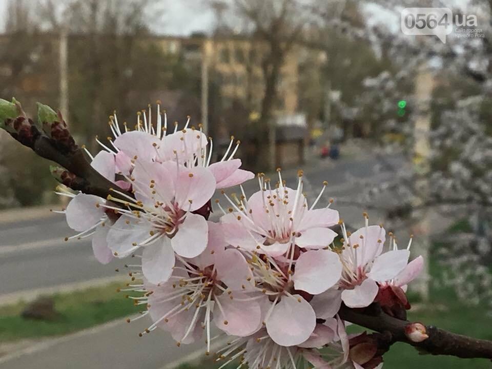 """""""Остановись, мгновение весны!"""", - криворожане любуются весной и сохраняют красоту на память, - ФОТО, фото-21"""