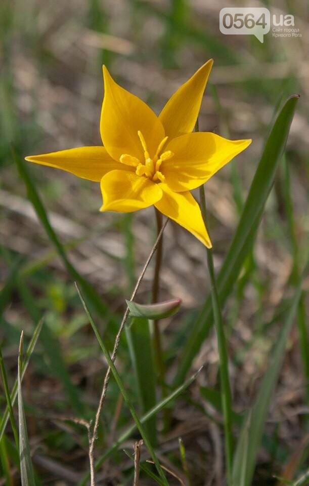 """""""Остановись, мгновение весны!"""", - криворожане любуются весной и сохраняют красоту на память, - ФОТО, фото-1"""