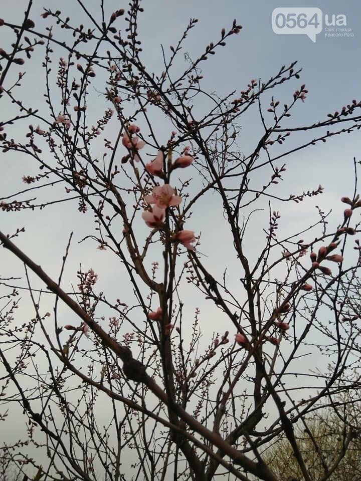 """""""Остановись, мгновение весны!"""", - криворожане любуются весной и сохраняют красоту на память, - ФОТО, фото-7"""