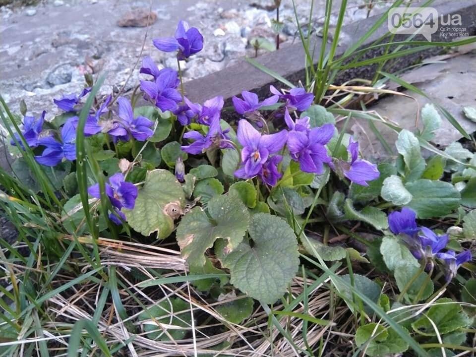 """""""Остановись, мгновение весны!"""", - криворожане любуются весной и сохраняют красоту на память, - ФОТО, фото-6"""