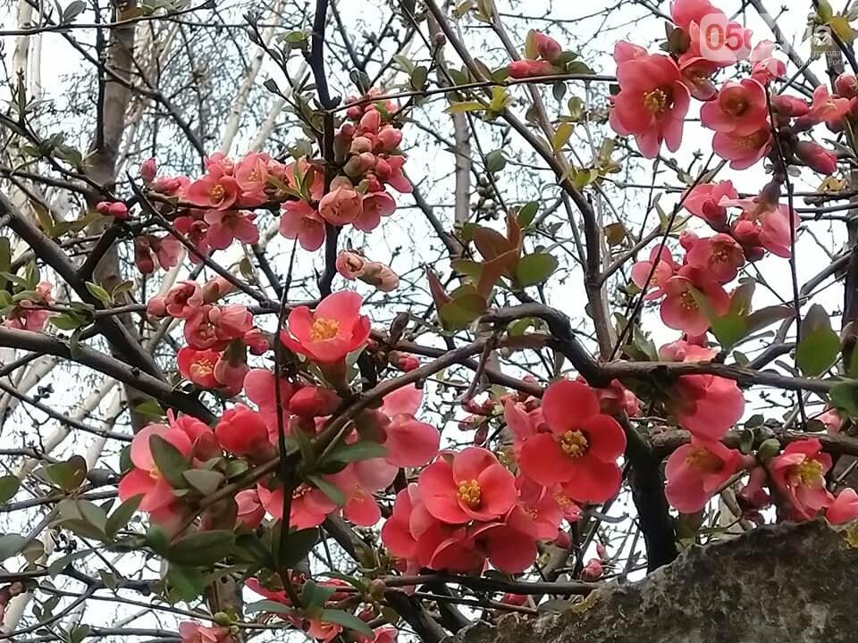 """""""Остановись, мгновение весны!"""", - криворожане любуются весной и сохраняют красоту на память, - ФОТО, фото-4"""
