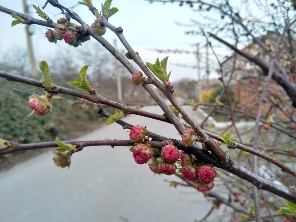 """""""Остановись, мгновение весны!"""", - криворожане любуются весной и сохраняют красоту на память, - ФОТО, фото-9"""