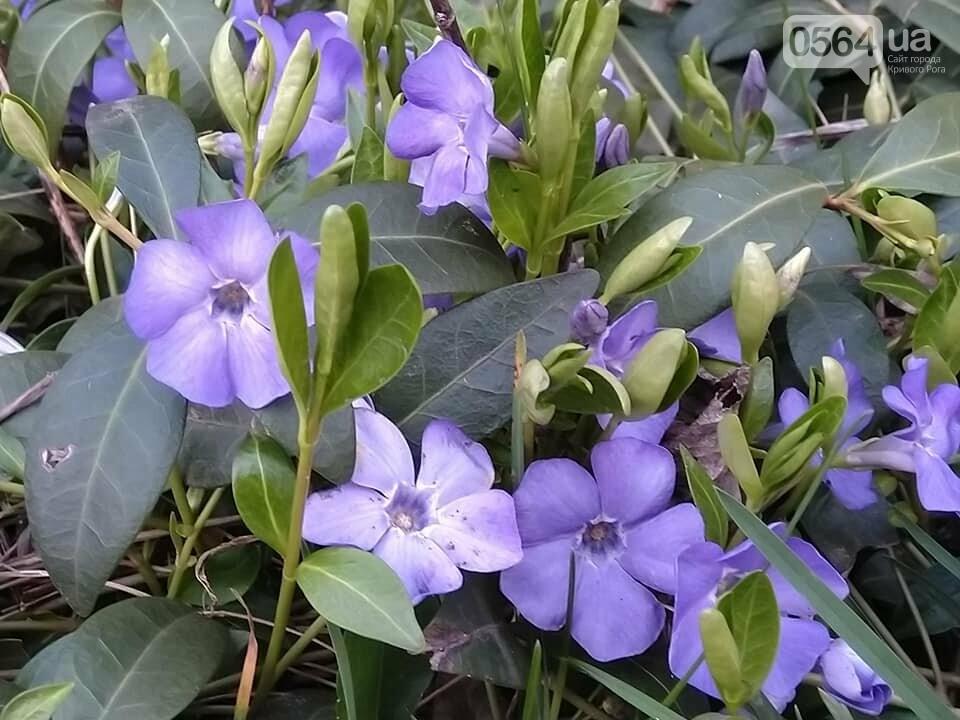 """""""Остановись, мгновение весны!"""", - криворожане любуются весной и сохраняют красоту на память, - ФОТО, фото-10"""