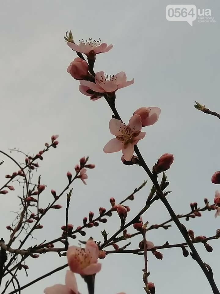 """""""Остановись, мгновение весны!"""", - криворожане любуются весной и сохраняют красоту на память, - ФОТО, фото-11"""