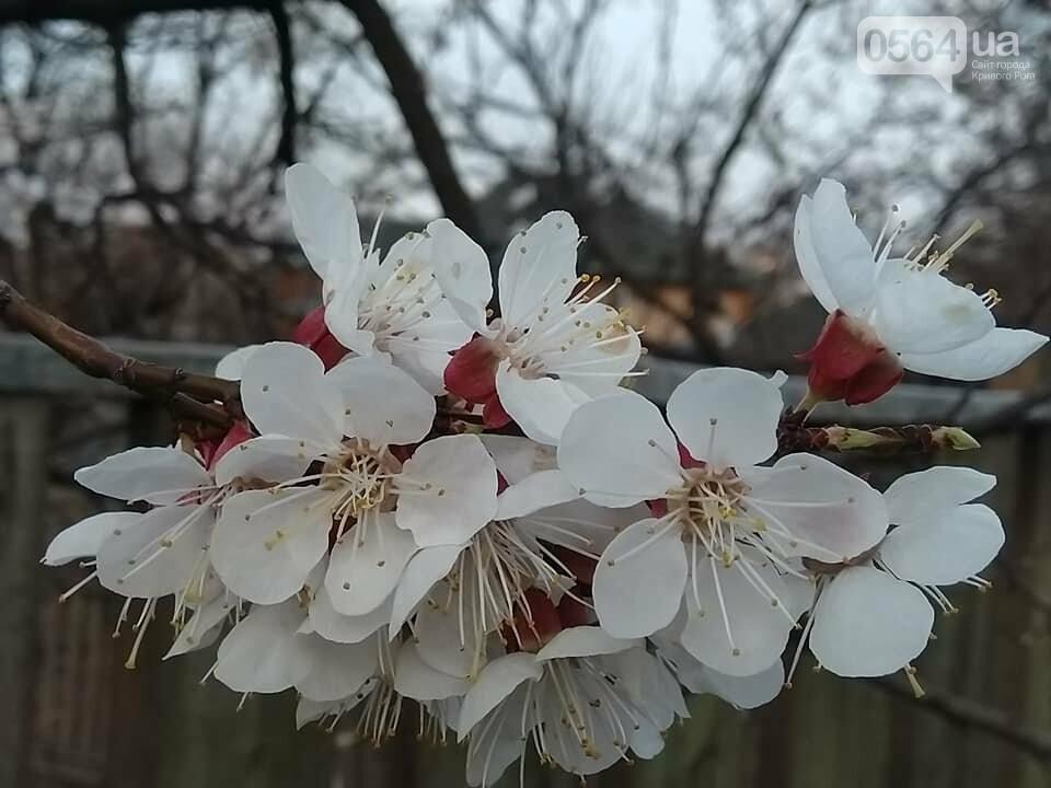 """""""Остановись, мгновение весны!"""", - криворожане любуются весной и сохраняют красоту на память, - ФОТО, фото-18"""