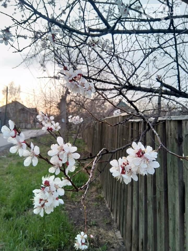 """""""Остановись, мгновение весны!"""", - криворожане любуются весной и сохраняют красоту на память, - ФОТО, фото-14"""