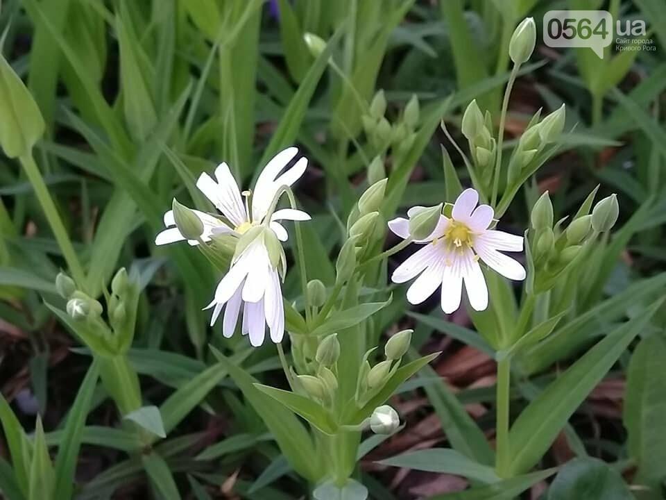 """""""Остановись, мгновение весны!"""", - криворожане любуются весной и сохраняют красоту на память, - ФОТО, фото-13"""