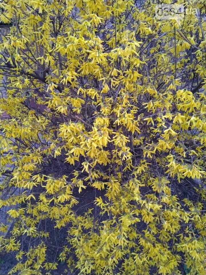 """""""Остановись, мгновение весны!"""", - криворожане любуются весной и сохраняют красоту на память, - ФОТО, фото-12"""