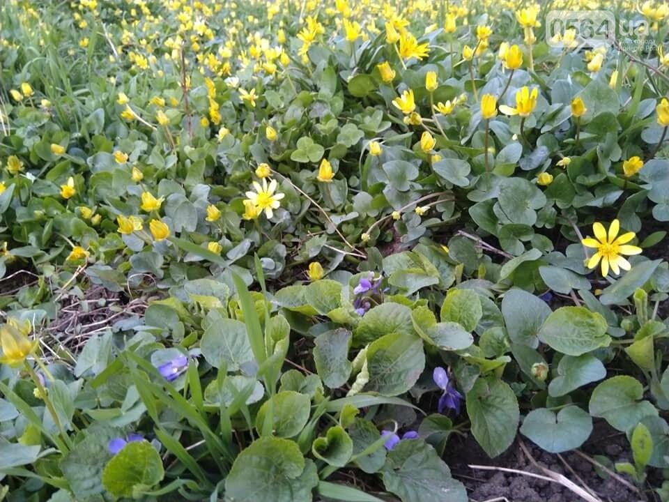 """""""Остановись, мгновение весны!"""", - криворожане любуются весной и сохраняют красоту на память, - ФОТО, фото-15"""