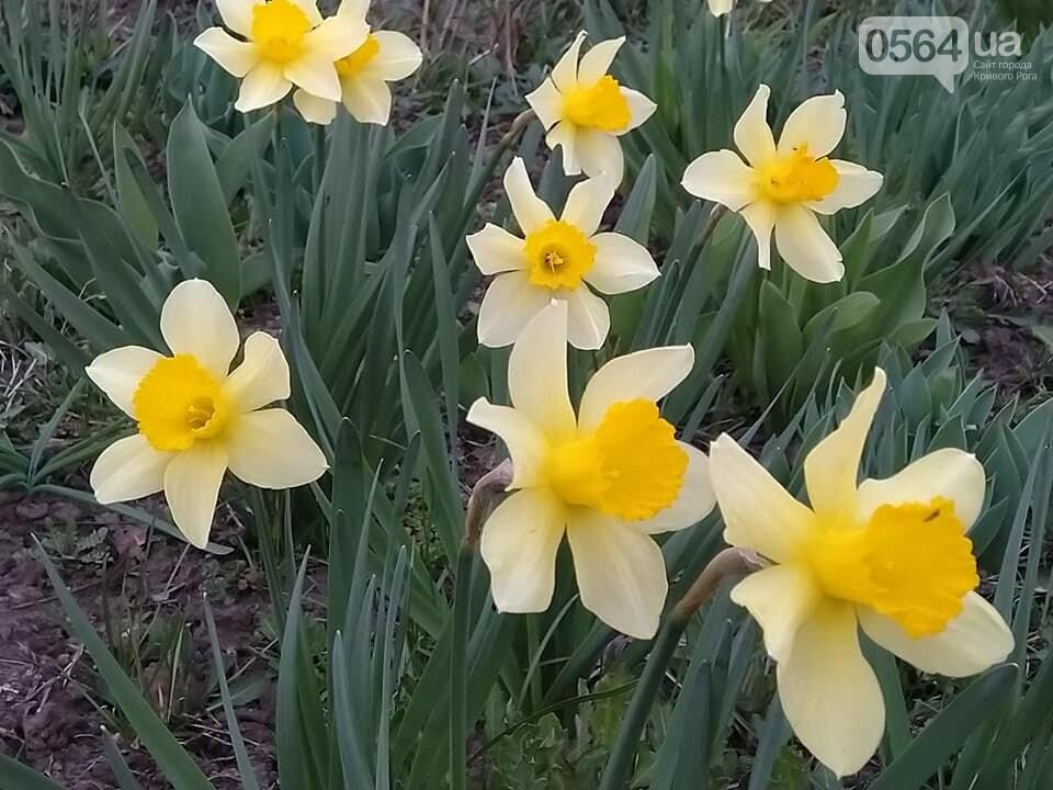 """""""Остановись, мгновение весны!"""", - криворожане любуются весной и сохраняют красоту на память, - ФОТО, фото-16"""