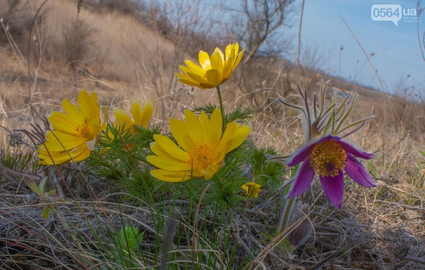 """""""Остановись, мгновение весны!"""", - криворожане любуются весной и сохраняют красоту на память, - ФОТО, фото-3"""