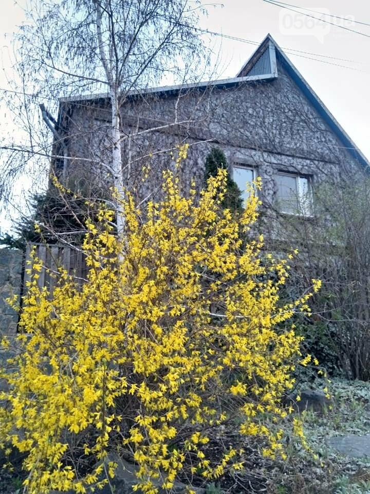"""""""Остановись, мгновение весны!"""", - криворожане любуются весной и сохраняют красоту на память, - ФОТО, фото-17"""