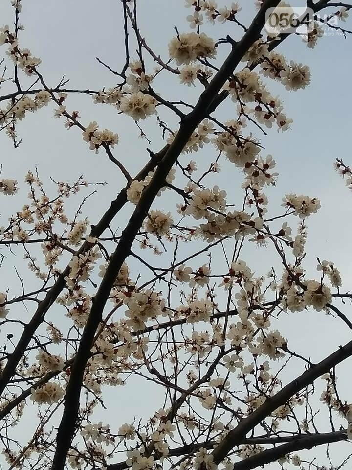 """""""Остановись, мгновение весны!"""", - криворожане любуются весной и сохраняют красоту на память, - ФОТО, фото-19"""