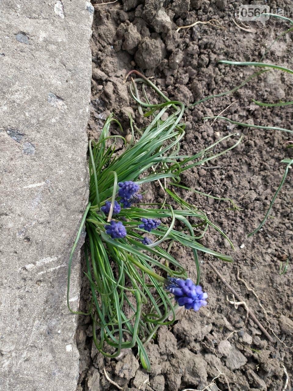 """""""Остановись, мгновение весны!"""", - криворожане любуются весной и сохраняют красоту на память, - ФОТО, фото-28"""