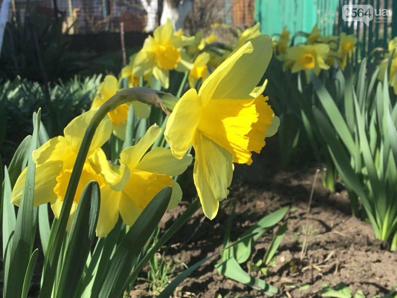"""""""Остановись, мгновение весны!"""", - криворожане любуются весной и сохраняют красоту на память, - ФОТО, фото-23"""