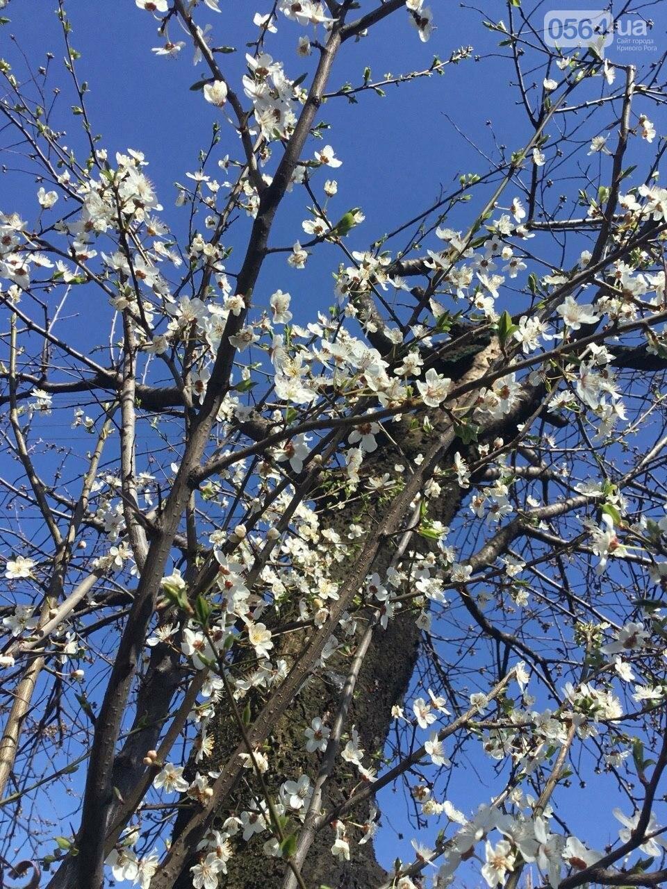 """""""Остановись, мгновение весны!"""", - криворожане любуются весной и сохраняют красоту на память, - ФОТО, фото-32"""