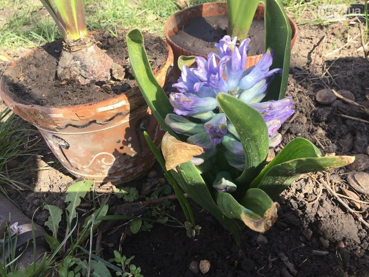 """""""Остановись, мгновение весны!"""", - криворожане любуются весной и сохраняют красоту на память, - ФОТО, фото-30"""