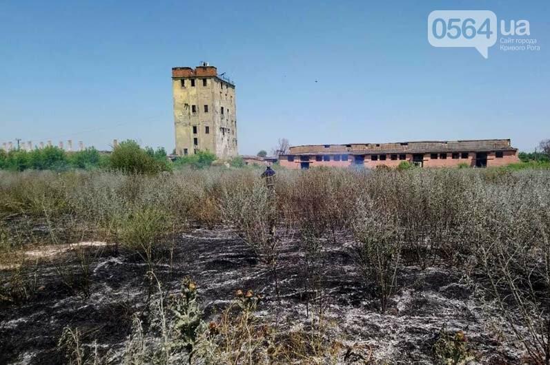 Под Кривым Рогом загорелся пустырь - выгорело почти 5 гектаров травы, - ФОТО , фото-1